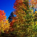 Fall Foliage Palette Print by Scott McGuire