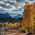 Fall in the Eastern Sierra Poster by Cat Connor