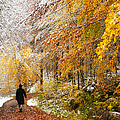 Fall or winter - autumn colors and snow in the forest Print by Matthias Hauser