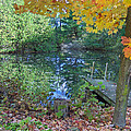 Fall Scene by Pond Poster by Brenda Brown