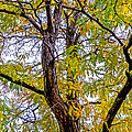 Fall Tree Print by Baywest Imaging