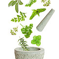 Falling Herbs Print by Christopher and Amanda Elwell