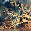 Fantasy Surreal Trees and Seagull Flying Poster by Kathy Fornal