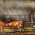 Farm - Cow - A couple of Cows Print by Mike Savad