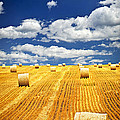Farm field with hay bales in Saskatchewan Print by Elena Elisseeva