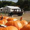 Farm Stand Pumpkins Print by Barbara McDevitt