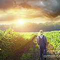 Farmer walking in corn fields at sunset Print by Sandra Cunningham