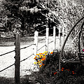 Fence near the Garden Poster by Julie Hamilton