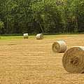 Field of Freshly Baled Round Hay Bales Poster by James BO  Insogna