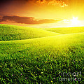 Field of Grass and Sunset Print by Boon Mee