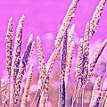 Field of Grass and Wildflowers Print by Artist and Photographer Laura Wrede
