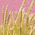 Field of Grass and Wildflowers III Print by Artist and Photographer Laura Wrede