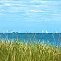 Figawi Sailboat Race Print by Diane Diederich