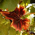 First Signs of Autumn Poster by Dry Leaf