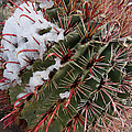 Fish Hook Barrel Cactus with Snow Poster by Susan  Degginger