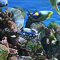 Fish - National Aquarium in Baltimore MD - 1212113 Print by DC Photographer