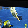Fish - National Aquarium in Baltimore MD - 1212117 Print by DC Photographer