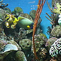 Fish - National Aquarium in Baltimore MD - 121232 Poster by DC Photographer