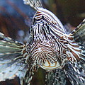 Fish - National Aquarium in Baltimore MD - 121263 Print by DC Photographer