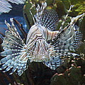 Fish - National Aquarium in Baltimore MD - 121266 Print by DC Photographer