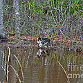 Fishing Feline Print by Al Powell Photography USA