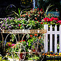 Flower Cart in Bloom Print by adSpice Studios
