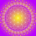 Flower of Life Poster by Sarah  Niebank