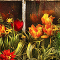 Flower - Tulip - Tulips in a window Poster by Mike Savad
