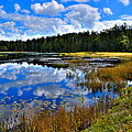 Fly Pond in the Adirondacks II Print by David Patterson