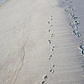 Footprints and Pawprints Poster by Diane Macdonald