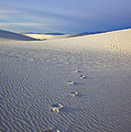 Footprints Print by Mike  Dawson