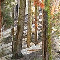 Forest for the Trees Print by Jeff Kolker