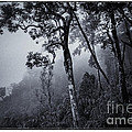 Forest in the fog Poster by Setsiri Silapasuwanchai