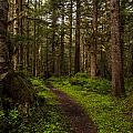 Forest Serenity Path Print by Mike Reid