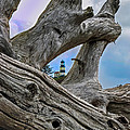 Framed Lighthouse Print by Robert Bales