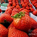 fresh strawberries Print by Peggy J Hughes