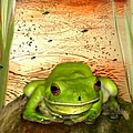 Froggy Heaven Poster by Holly Kempe