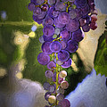 Fruit of the Vine Print by Donna Kennedy