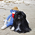 Funky Monkey and Sweet Shih Tzu Poster by Al Powell Photography USA
