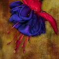 Fuschia Flower Poster by Susan Candelario