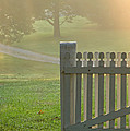 Gate in Morning Fog Print by Olivier Le Queinec