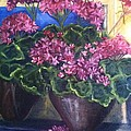 Geraniums Blooming Print by Sherry Harradence