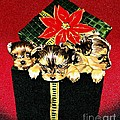 Gift Puppies Print by Judy Skaltsounis