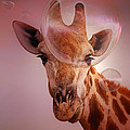 Giraffe looking at soap bubbles - artwork Poster by Johan Swanepoel