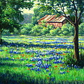 Glen Rose Bluebonnets Poster by Vickie Fears