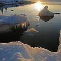Golden Glow Print by Sandra Updyke