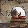 Golden Spirals Poster by Terry Rowe