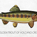 Golden Trout of Volcano Creek Print by Aged Pixel