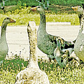 Goose Chat Print by Artist and Photographer Laura Wrede