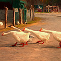 Goose Crossing Print by Michael Pickett